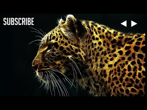 Martin Garrix - Animals Extended 10 Hours