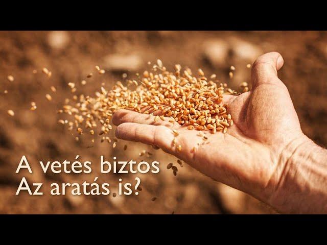 A vetés biztos. Az aratás is? - Márk 4:1-20 - 2021. 01. 24.