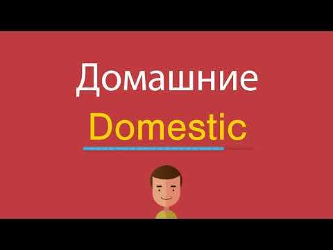 Домашние по-английски