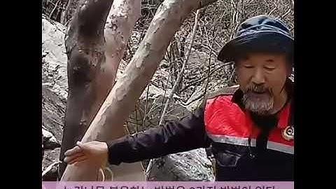 노각나무의 효능과 복용방법
