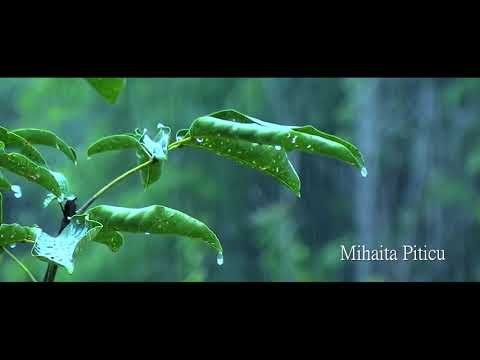 Mihaita Piticu - Ploua [official song]