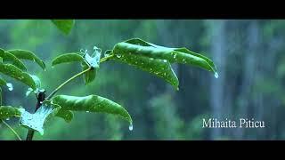 Mihaita Piticu - Ploua [official song] اغنية رومانية مترجمة