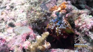 Borneo Divers Mabul Resort
