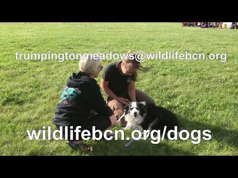 Trumpington Dog Zones