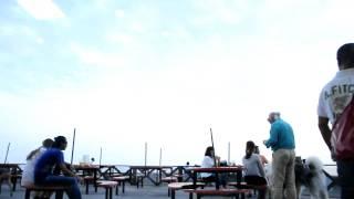 ファーストフード店のテラス席。 なんと大きなワンちゃん登場〜 「アラ...