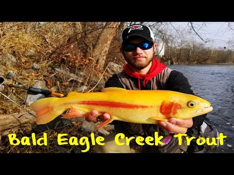 Bald Eagle Creek Trout Fishing