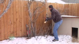 Rejuvenation Pruning on Lilacs | From the Ground Up