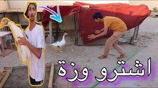 اشترو وزة / و مربي الحمام يزبط العريشة