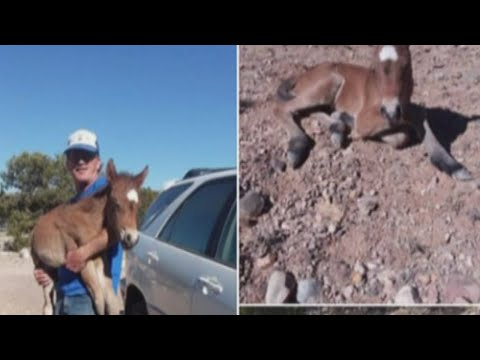 Case dismissed against rescuer accused of illegally saving wild horse