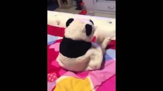 パンダの着ぐるみまとった猫、アングルによっては完全なパンダに