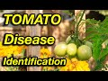 Stop Worrying About Tomato Diseases. Watch This!
