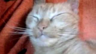Сон рыжей кошки 3 / Sleeping pet Cat 3.mp4