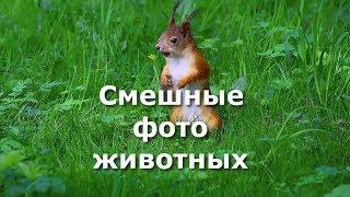 Смешные фото животных ч. 1