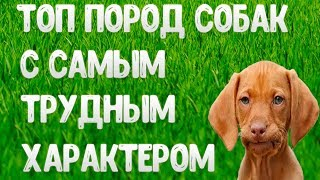 Топ пород собак с трудным характером