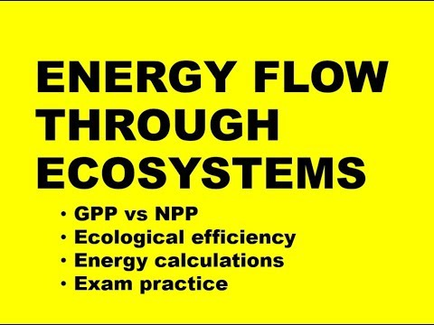 ENERGY FLOW THROUGH ECOSYSTEMS: calculations + exam practice (Exam 1)