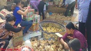 ĐỘC LẠ CHỢ VỊT CON, GÀ CON CHỢ PHIÊN BẢN NGÀ PHẦN 2 I Thai Lạng Sơn