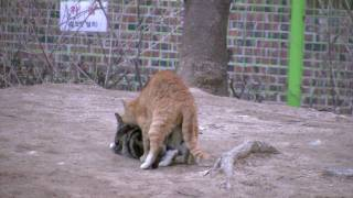 고양이 붕가.mov