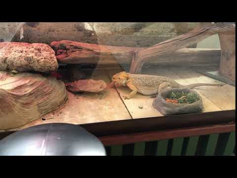 Woodside Montessori ACADEMY - OUR PETS - Rex having a snack