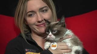 RIP Grumpy Cat, Adorable Internet Sensation and Arizona Native