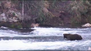 grazer protects her cubs 8 3 16