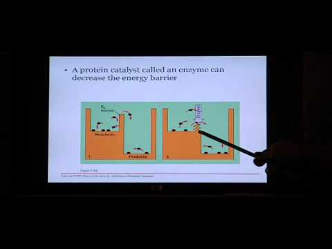 Biology Help: Biology 123 Chapter 5 Energy and Metabolism