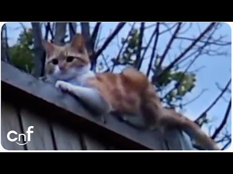 talking-cat-says-hello-|-funny-cat-conversation