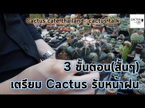 CCT. EP.33  เคล็ดลับ 3 ขั้นตอนสั้นๆ เตรียม cactus รับหน้าฝน