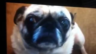 Pug Files