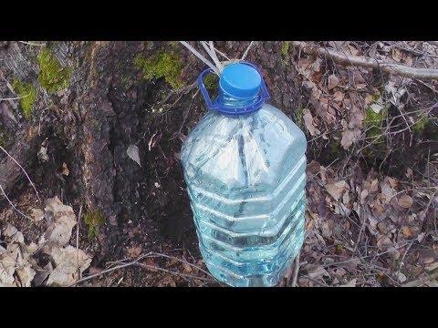 Как собирать и хранить березовый сок