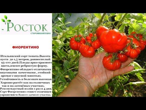 томат ФИОРЕНТИНО семена почтой ДНР ЛНР