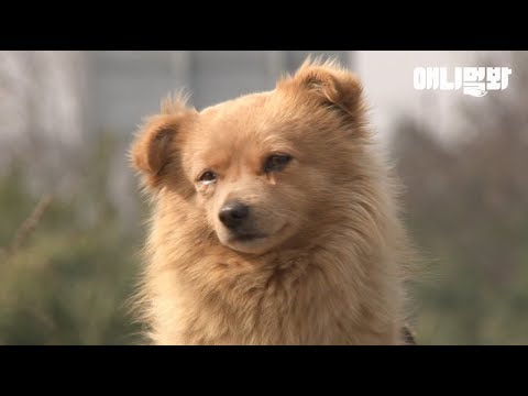 Dog Left Alone At The Bus Stop Cries Every Day, Because..