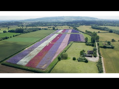 Watch the story of the beautiful Confetti Flower Field...