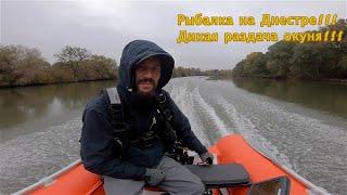 Рыбалка на Днестре Сумасшедший клев окуня 28 10 2019