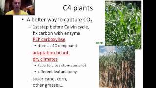 c3 and c4 plants