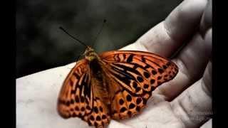 Урок бабочки  Притч  Как достичь успеха