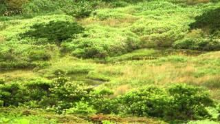 久住山系の 餓鬼田 (池塘)