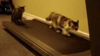 Кошки бегут по дорожке .