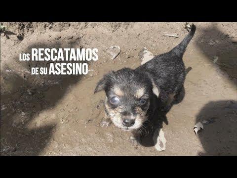 rescatamos-a-este-perrito-de-la-muerte-⚠️-duoclaws