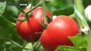 Прорыв в экспортной отрасли.(Uzagro)(, 2017-08-02T05:13:49.000Z)