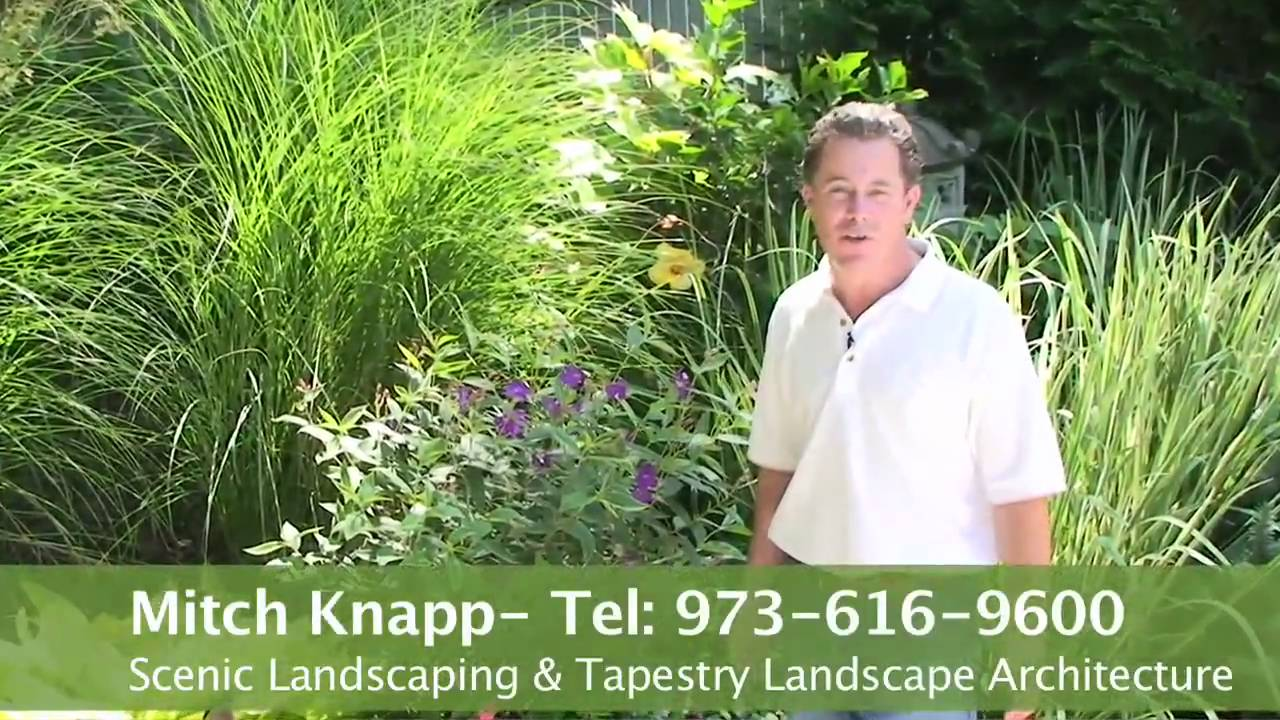 how to use tropical plants in your garden and landscaping youtube