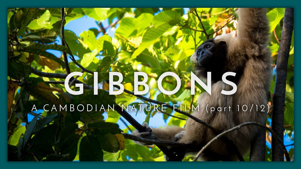A Cambodian Nature Film - (Part 10 / 12)