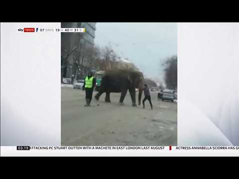 Two-elephants-escape-from-circus-Russia-Sky-News-24th-January-2020