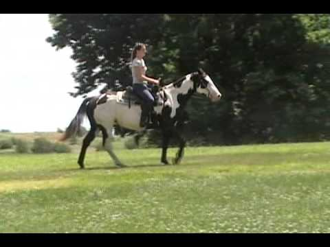 Black And White Overo Mare For Sale