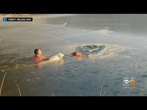 Maui - Man and His Dog Save Two Other Dogs In Frozen Reservoir