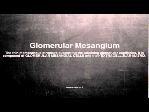 Medical vocabulary: What does Glomerular Mesangium mean