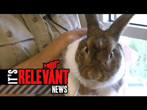 Pet of the Week: Domesticated Rabbit Stanley