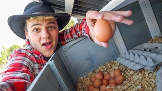 My CHICKENS Had 30+ EGGS!!!