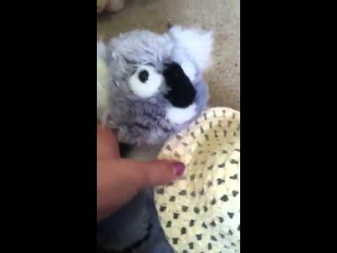 Kenny the koala sings his weird songs