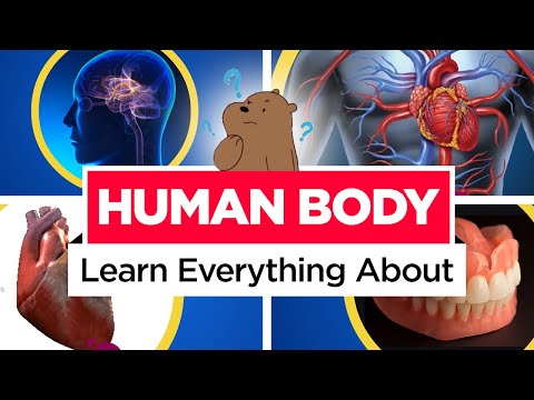 Learn about Human Body | General Knowledge (GK) Video | Basic Educational video | Preschool Learning