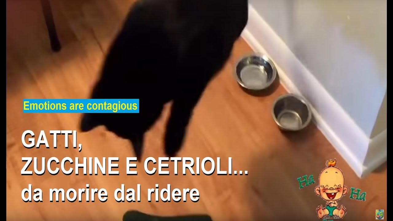 Viral Cats Scared By Zucchini And Cucumbers Too Funny Youtube